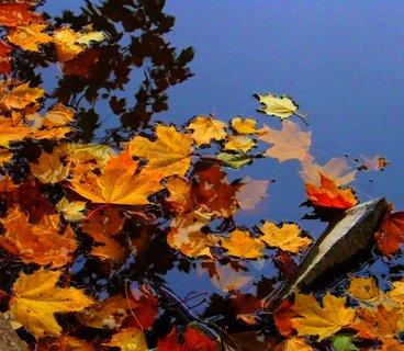 FOTKA - včerejší podzimní procházka, listí na hladině s odrazy stromů...