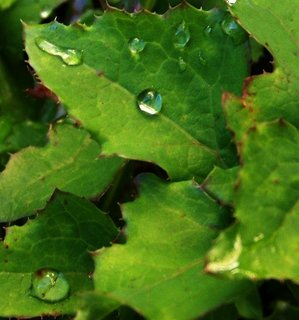 FOTKA - 13.10.2012, kapky na listech plevele