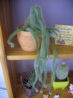 FOTKA - Ten kaktus se zbláznil,to je snad liana