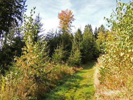 FOTKA - sluníčkový podzim v lese