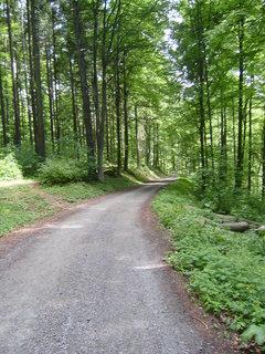 FOTKA - cesta na Nový Hrad 11