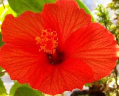 FOTKA - 17.10.12, sluníčko krásně rozvilo květ..