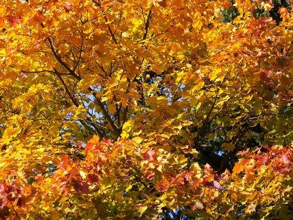 FOTKA - 18.10.12, odpolední procházka k rybníku, javor