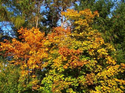 FOTKA - 18.10.12, odpolední procházka k rybníku, cesta kolem lesa