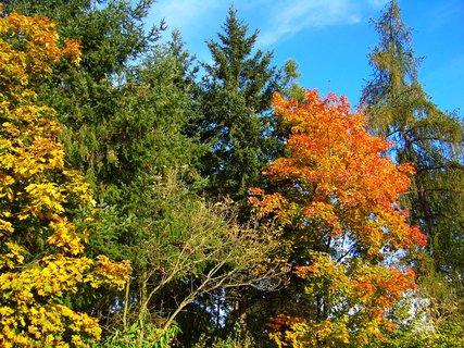 FOTKA - 18.10.12, odpolední procházka k rybníku, les podél cesty..