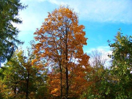 FOTKA - 18.10.12, odpolední procházka k rybníku, osamělý strom na mýtince