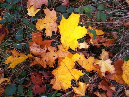 FOTKA - 18.10.12, odpolední procházka, listí v trávě..