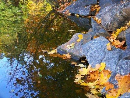FOTKA - 18.10.12, odpolední procházka, listy na kamenech u splatu..