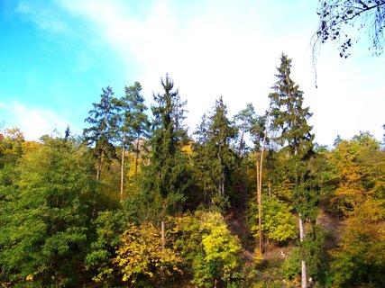 FOTKA - 18.10.12, Kunratický podzimní les..