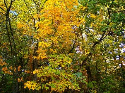 FOTKA - 18.10.12, barevné stromy na kraji lesa..