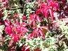 podzim v úžasných barvách-11