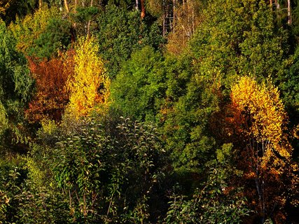 FOTKA - 19.10.2012, stromy v lese se barví...
