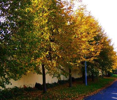 FOTKA - 19.10.2012, stromy podél cesty...