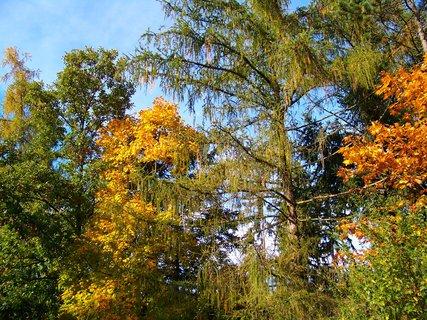 FOTKA - 19.10.2012, modříny se již také barví..