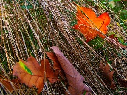 FOTKA - 19.10.2012, listy v suché trávě..
