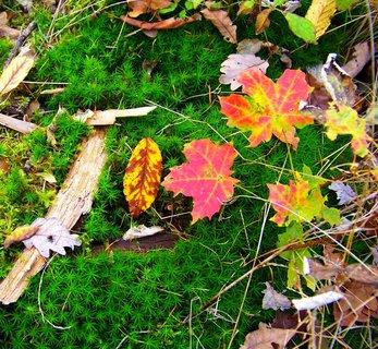 FOTKA - 19.10.2012, ještě zelený mech v lese..