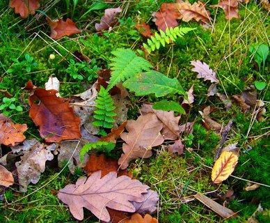 FOTKA - 19.10.2012, kontrast zelené s podzimními listy..