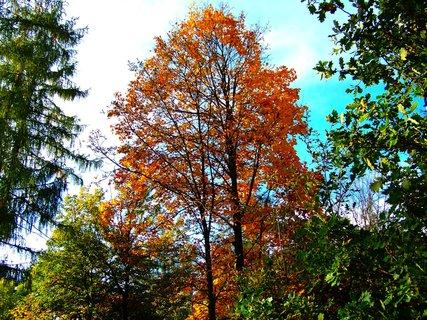 FOTKA - 19.10.2012, strom na paloučku..