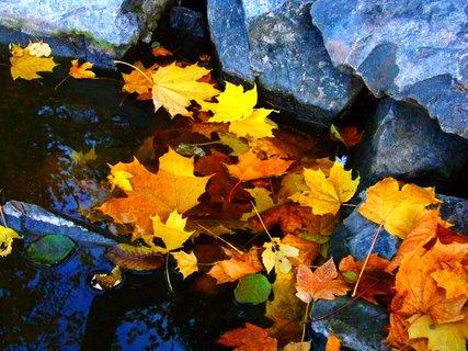 FOTKA - 19.10.2012, listí u kamenů u břehu...