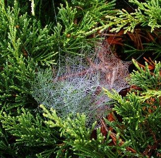 FOTKA - 20.10.2012, ranní procházka za mlhy, pavučinka