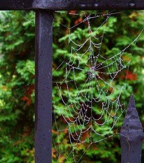 FOTKA - 20.10.2012, ranní procházka za mlhy, pavučinka..