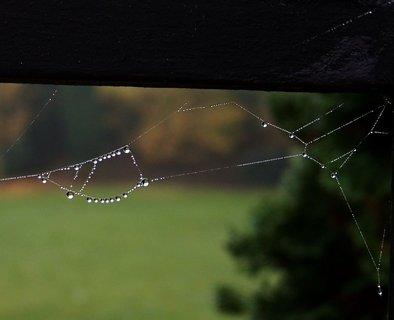 FOTKA - 20.10.2012, ranní procházka za mlhy, kapky na pavučince