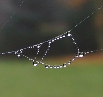 FOTKA - 20.10.2012, i sychravý podzim umí čarovat....