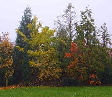 FOTKA - 20.10.2012, podzimní zahrada zahalená ranní mlhou
