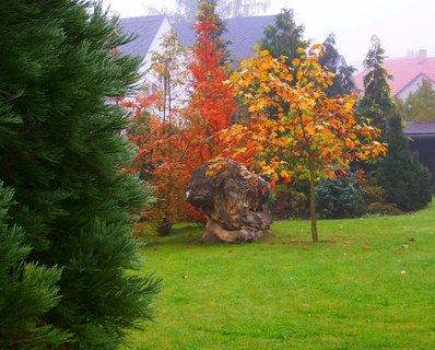 FOTKA - 20.10.2012, zahrádka v mlze....