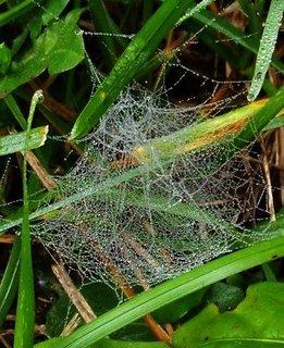 FOTKA - 20.10.2012, jemně utkaná pavučinka po ránu..