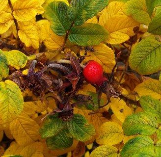 FOTKA - 20.10.2012, červený šípek s barvami podzimu..