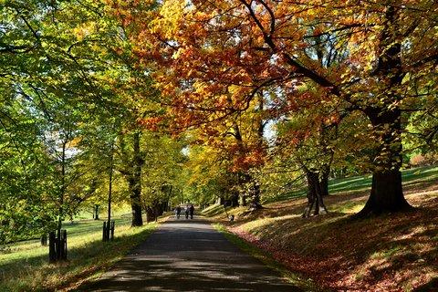 FOTKA - podzimní cesta oborou