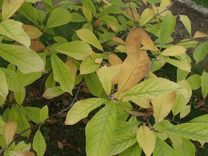 FOTKA - 2012 farby jesene2