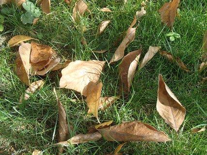 FOTKA - listy v tráve