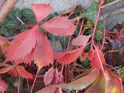 FOTKA - 2012 farby jesene5