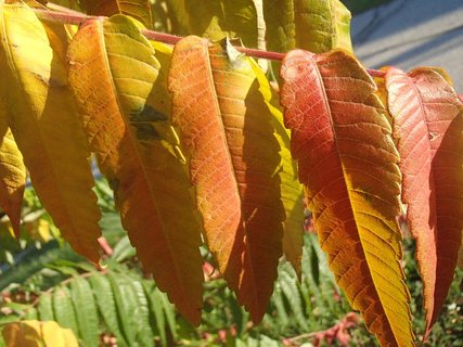 FOTKA - 2012 farby jesene6