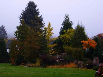 FOTKA - 21.10.2012, mlhavé dopoledne, zahrádka...