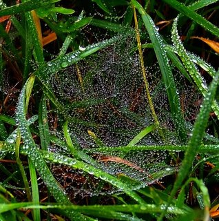 FOTKA - 21.10.2012, mlhavé dopoledne, další pavučinka..