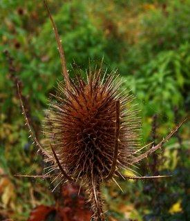 FOTKA - 21.10.2012, mlhavé dopoledne, suché je také hezké