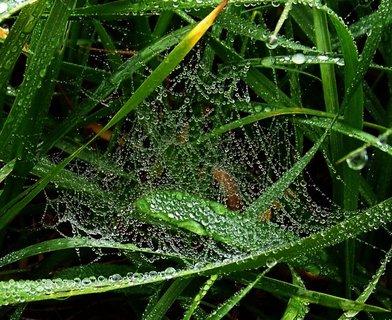 FOTKA - 21.10.2012, mlhavé dopoledne, kapičková pavučinka v trávě...