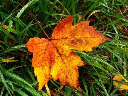 FOTKA - 21.10.2012, mlhavé dopoledne, javorový list ...