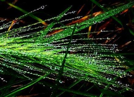 FOTKA - 21.10.2012, orosený klásek v trávě zblízka..