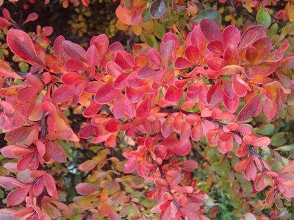 FOTKA - 2012 farby jesene7
