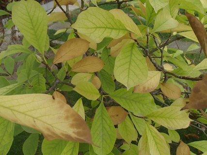 FOTKA - 2012 farby jesene9