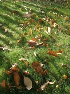 FOTKA - listy v tráve.