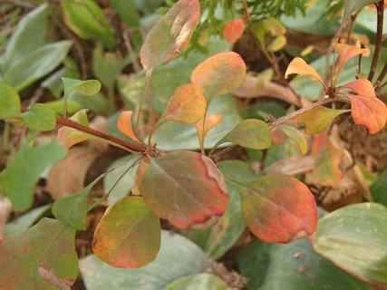 FOTKA - 2012 farby jesene12
