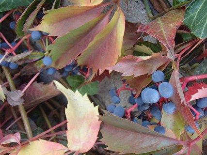 FOTKA - 2012 farby jesene13