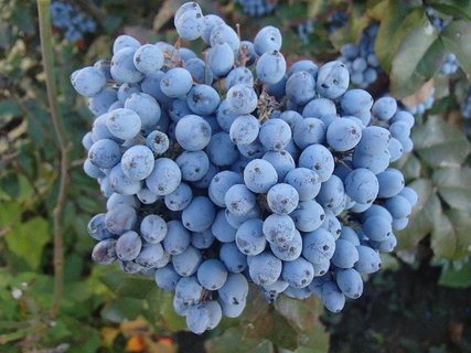 FOTKA - jesenné plody