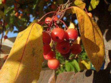 FOTKA - jesenné plody.