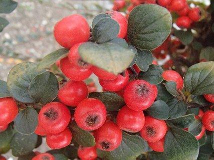 FOTKA - jesenné plody....